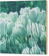 Shimmering Tulips Wood Print