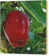 Shiny Red And Ripe  Wood Print