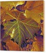Shiny Sycamore Wood Print