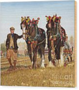 Shire Horses Wood Print