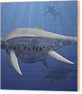 Shonisaurus Popularis Swimming Wood Print