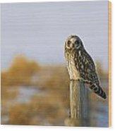 Short-eared Owl, Alberta, Canada Wood Print