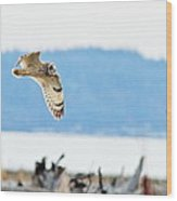 Short Eared Owl Hunting Wood Print