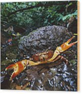 Short-tailed Crab Potamocarcinus Sp Wood Print