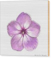 Shortwood Phlox  2 Wood Print by Steve Asbell