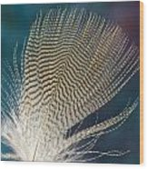Wood Duck Feather Wood Print