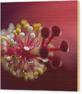 Showy Tropical Vibrant Red Hibiscus Pistil Wood Print