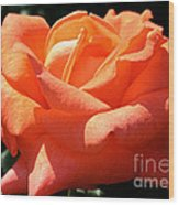 Shreveport Rose Wood Print