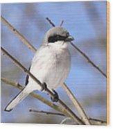 Shrike - Bird - Unique Beak Wood Print