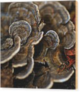 Shrooms Abstracted Wood Print
