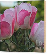 Shrub Roses Wood Print