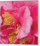 Shy Camellia Wood Print
