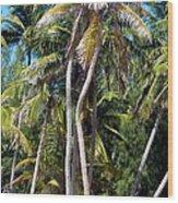 Shy Palms Wood Print