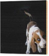 Shy Puppy Wood Print by by Eudald Castells