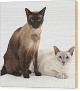 Siamese Cats Wood Print
