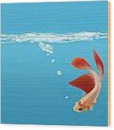 Siamese Fighting Fish Betta Splendens Wood Print