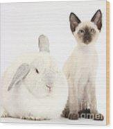 Siamese Kitten And White Rabbit Wood Print