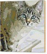 Siamese Mix Kitten Wood Print by Dorothy Walker