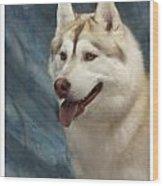 Siberian Husky 954 Wood Print