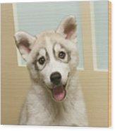 Siberian Husky Puppy In Front Of Door Wood Print
