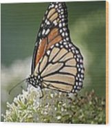 Side Profile Of A Monarch Wood Print