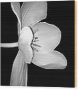 Sideways Tulip In Monochrome Wood Print