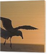 Silhouette Of A Seagull In Flight At Wood Print