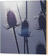 Silhouette Of Weeds Wood Print
