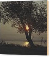 Silhouette Of Willow Tree At Sunset Wood Print