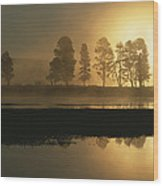 Silhouetted Trees Along The Yellowstone Wood Print