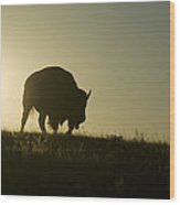 Silhouettes Of Roaming Bison Wood Print by Pete Ryan