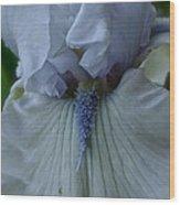 Silky Iris Wood Print