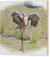 Silly Sandhill Crane Chick Wood Print