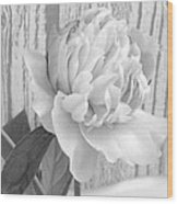 Silver Beauty Wood Print