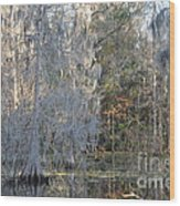 Silver Cypress Wood Print