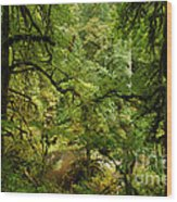 Silver Falls Rainforest Wood Print