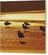 Silver Gulls On Golden Beach Wood Print