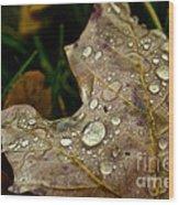 Silver Maple Rain Wood Print
