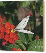 Silver Moth Wood Print