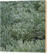 Silver Mound Dew Drenched Wood Print