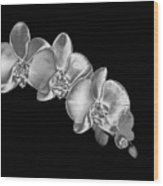 Silver Phaelenopsis Orchid On A Black Background Wood Print