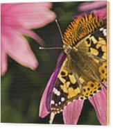 Simple Butterfly Wood Print