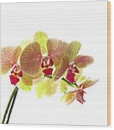 Simplified Orchids I Wood Print