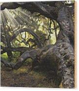 Simply Old Oak  Wood Print