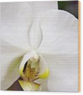 Simply Pure Orchid Wood Print
