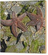 Simply Starfish Wood Print