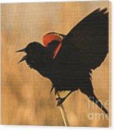 Singing At Sunset Wood Print