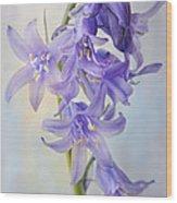 Single Bluebell Wood Print