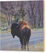 Single Buffalo In Yellowstone Np Wood Print