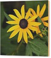 Single Daisy Wood Print